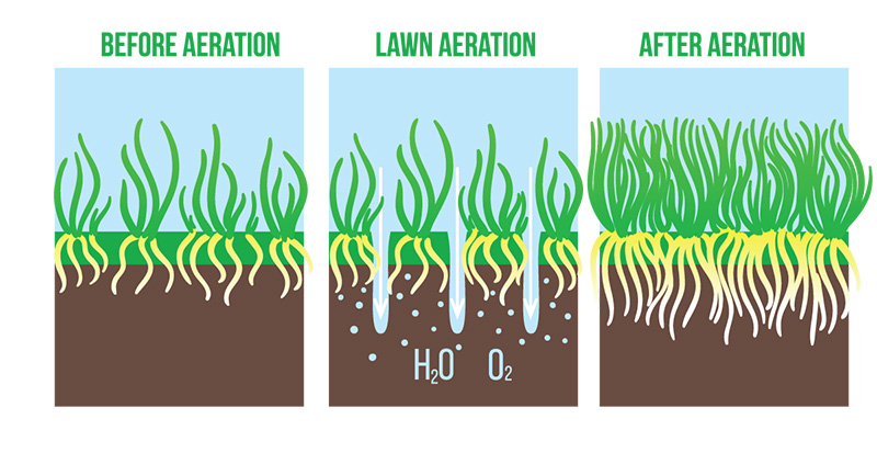 Now Is the Time to Aerate and Overseed Your Lawn!