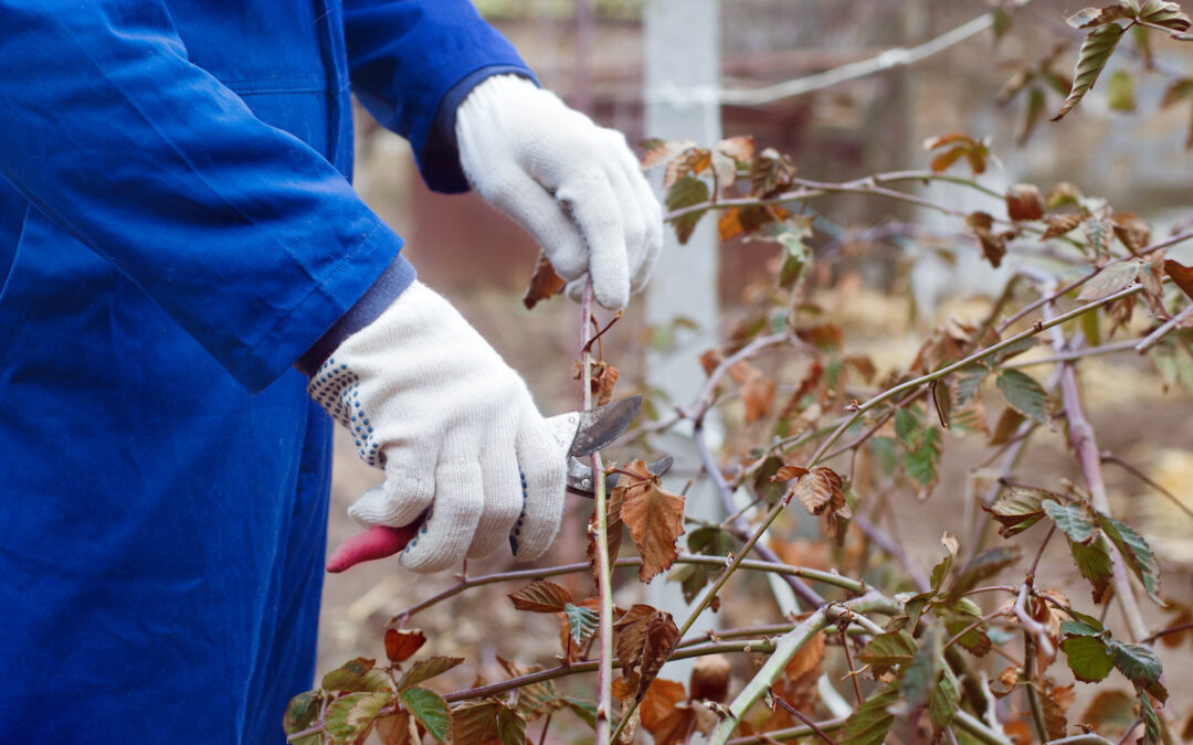 How to Prune Your Shrubs