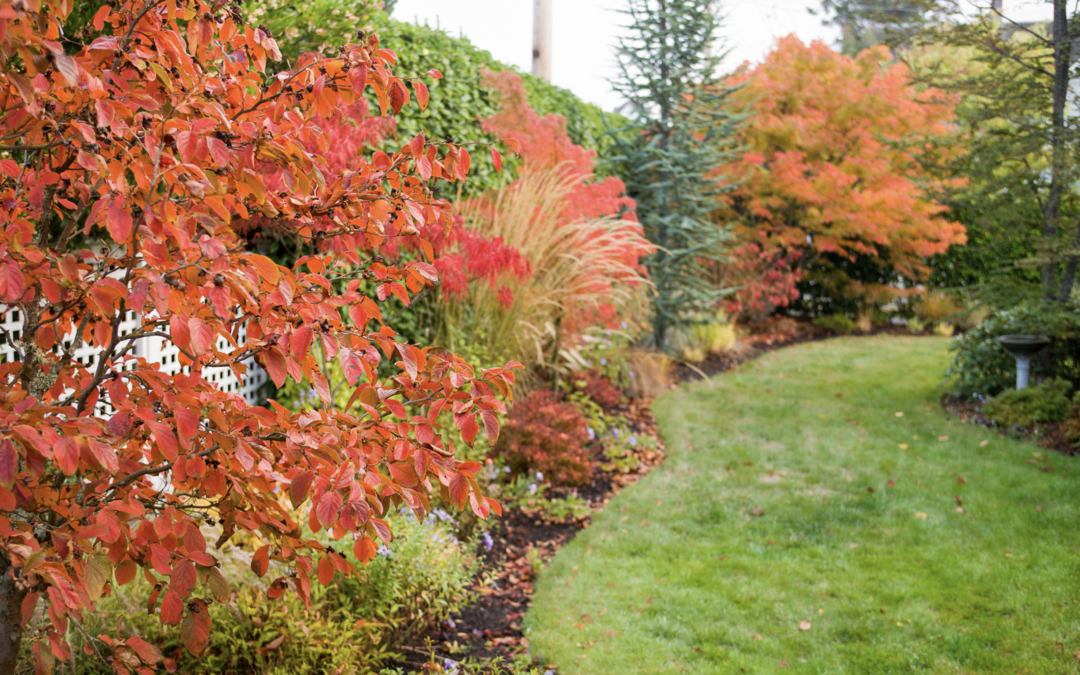 Three Things Your Landscape Needs during the Fall Season!